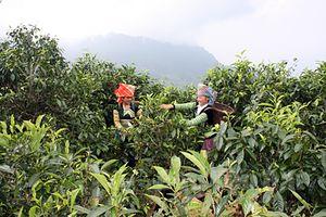 Yên Bái: Chú trọng hỗ trợ kinh tế hợp tác xã phát triển