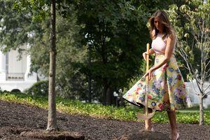 Phu nhân Tổng thống Trump duyên dáng trồng cây tại Nhà Trắng