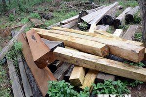 Vụ gỗ lậu tại Đắk Nông: Khởi tố một hạt trưởng Hạt Kiểm lâm huyện