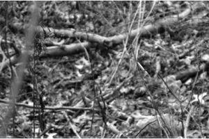 Chiếc đầu người bí ẩn ở bìa rừng