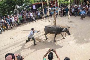 Chuẩn bị lễ hội đâm trâu, xã nghèo thu mỗi hộ dân 300.000 đồng