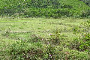 Bất cập xử phạt hành chính lĩnh vực đất đai