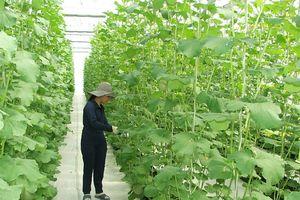 TP.HCM mời gọi đầu tư vào nông nghiệp, nông thôn