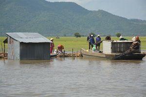 An Giang: Lũ lớn làm vỡ đê thiệt hại hơn 720 ha lúa thu đông