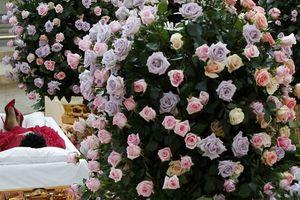 Người hâm mộ khóc tiễn biệt 'Nữ hoàng nhạc soul'