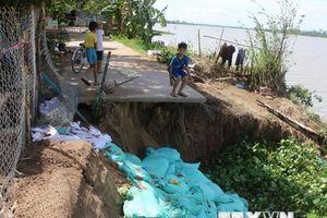 Đồng Tháp vẫn tiếp tục xảy ra sạt lở bờ sông Tiền do lũ về