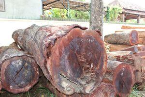 Thêm một lãnh đạo kiểm lâm tiếp tay cho trùm gỗ lậu Phượng 'râu'
