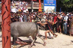 Vụ thu 300.000 đồng tổ chức lễ hội đâm trâu tại Huế: Buộc dừng lễ hội