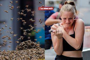 40.000 con ong đồng loạt tấn công, du khách chạy tán loạn
