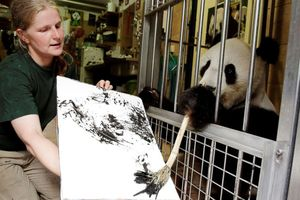 Lạ mắt với những bức tranh được tạo bởi 'họa sĩ' động vật