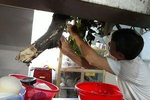 Quận 1: Cây cổ thụ tét nhánh, xuyên thủng nhà dân trong đêm