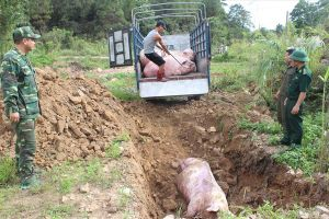 Nguy cơ bệnh dịch tả lợn Châu Phi vào Việt Nam: Bộ trưởng khẩn cấp ra công điện 'chặn'