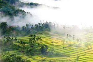 'Phượt' ở xứ ngàn cau, ngắm mây ngàn lang thang trên ruộng