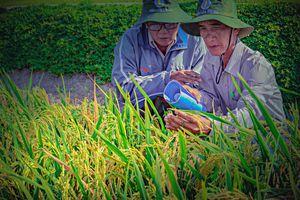 Tích cực hỗ trợ nông dân phát triển sản xuất, nâng cao đời sống