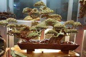 Mê tít những chậu bonsai gỗ cầu kỳ, tinh xảo