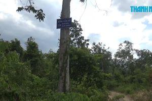 Phá rừng rồi tấn công lực lượng chức năng để 'giải cứu' gỗ lậu