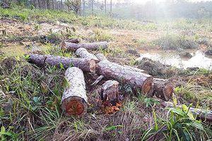 Để mất 4 ha rừng phòng hộ, phó chủ tịch xã bị đình chỉ công tác