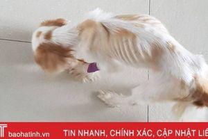 Bỏ đói chó cưng, người phụ nữ Singapore bị phạt hơn 42 triệu đồng