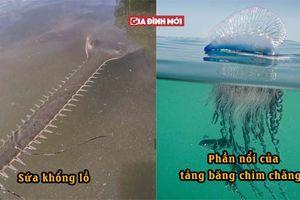 17 hình ảnh ngoạn mục thể hiện sức mạnh kỳ diệu của thiên nhiên, sứa khổng lồ trông thật đáng sợ