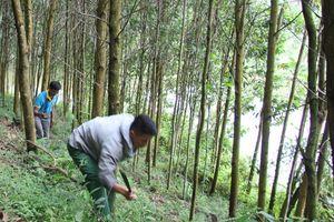 Bảo vệ, phát triển rừng theo hướng xã hội hóa