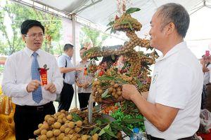 Nhãn lồng Hưng Yên tăng cường 'Nam tiến' và mở rộng xuất khẩu