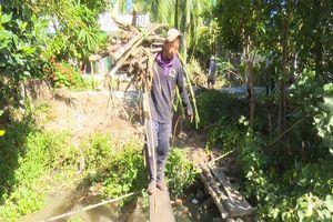 Nông dân Hậu Giang lo thất thu vụ mía vì 50% diện tích chưa có đầu ra