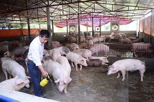 Tập huấn nuôi lợn thịt VietGAHP