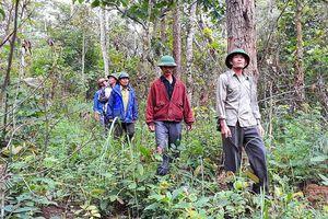Cựu chiến binh giữ rừng