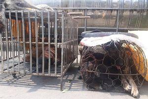 Đang bán chó vừa trộm được, 2 'cẩu tặc' bị công an bắt quả tang