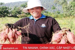 Nông dân Hà Tĩnh 'vẽ' bức tranh thần kỳ trong nông nghiệp
