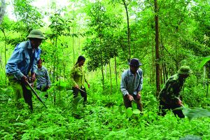 Lâm Đồng rà soát tình hình đất sản xuất của 246 hộ dân thiếu đất