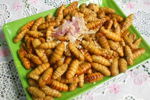 Món ăn thuốc từ nhộng tằm giúp bổ thận, tăng sinh lực cho nam giới