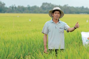 Nguồn cung và giá khí nào để giúp Đạm Cà Mau tiếp tục đóng góp cho nông nghiệp Việt?