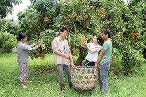 Sơn La đẩy mạnh chuyển đổi cây trồng