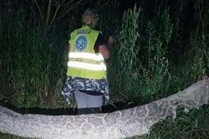 Truy tìm trăn khổng lồ dài 6 mét sổng chuồng ở Ba Lan