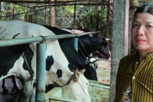 Thu hơn 40 triệu/tháng nhờ nuôi đàn bò sữa giữa phố