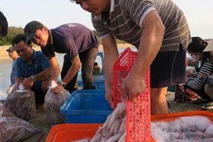 Tấp nập chợ cá tươi roi rói ở Bãi Phủ trên đảo Phú Quý