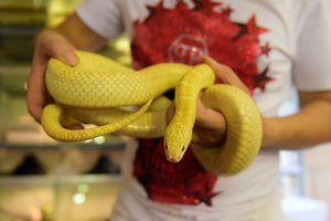 Khám phá bộ sưu tập rắn khủng của chàng trai 8X Hà Nội