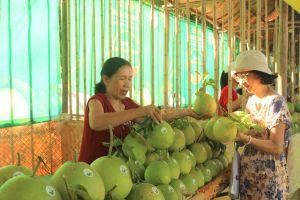 Thừa Thiên Huế: Khai mạc lễ hội Thanh trà 2018