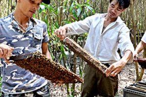 Cám cảnh: Mật rẻ hơn đường, người nuôi ong lỗ 'sặc gạch'