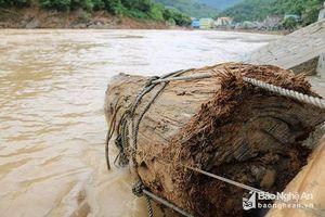 Nghệ An: Người dân vớt được khúc gỗ quý sau lũ trị giá 300 triệu đồng
