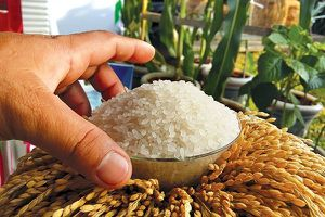 Hộ gia đình sẽ được hỗ trợ làm nông nghiệp hữu cơ