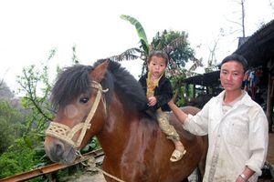 Lên xứ ngựa của người Mông