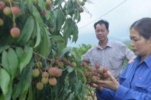 Biến đồi hoang thành vườn cây trái du lịch sinh thái giá tiền tỷ