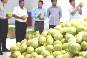 Phát triển vùng cây ăn trái Nam Bộ: Chờ nhà buôn bắt tay nông dân