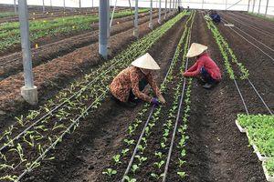Doanh nghiệp đầu tư nông nghiệp 'than' khó