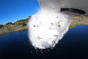 Cảnh tượng hiếm có hàng nghìn con cá hồi được máy bay thả xuống hồ