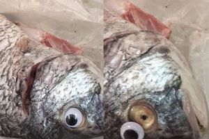 Hí hửng mua cá tươi, người đàn ông phát hiện điều giật mình...