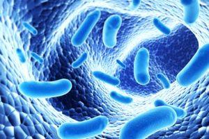 Siêu vi trùng kháng thuốc lan rộng trong bệnh viện toàn thế giới