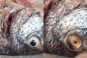 Gian thương lắp mắt giả, hô biến cá ươn thành tươi rói
